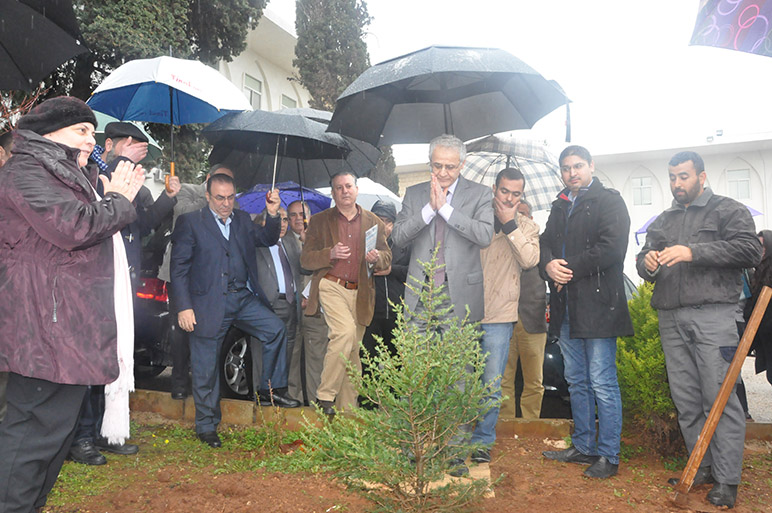 A cedar tree planted in memory of An Extraordinary